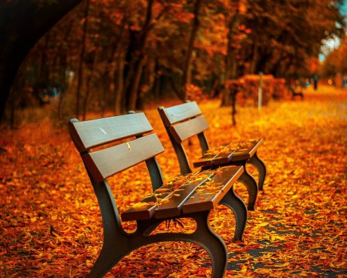 benches-560435_1920